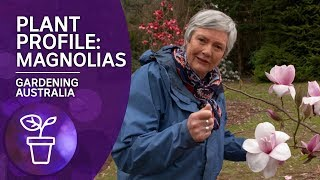 Plant Profile: Caring and Planting Magnolias