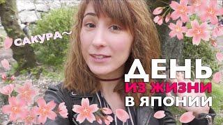 День из жизни в Японии. Цветение сакуры и день рождения Сомэ