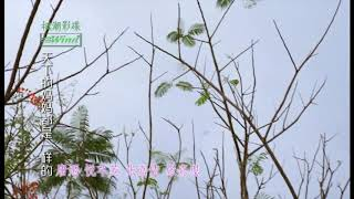 Tian Xia Ma Ma Dou Shi Yi Yang De * Eraine Tang Yan * Mandarin Love Song