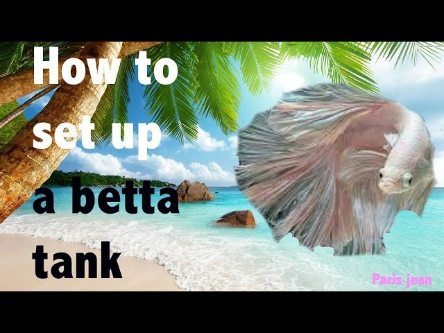 HOW TO CORRECTLY SET UP A BETTA FISH TANK