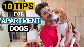How to Take Care of Dogs in an Apartment (10 Tips that ACTUALLY Work!!)