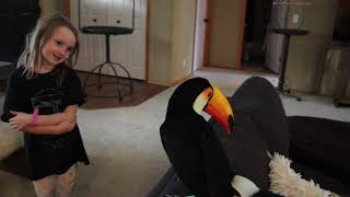 What My Toucan Thinks of Humans (Subtitled)