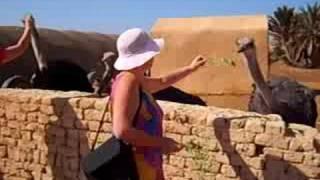 preview picture of video 'Ostrich farm near El Tor. На страусиной ферме в Торе, Египет'