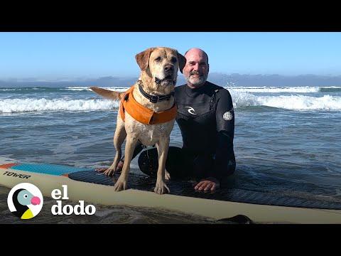 Las Aventuras De Charlie El Increíble Perro Surfista