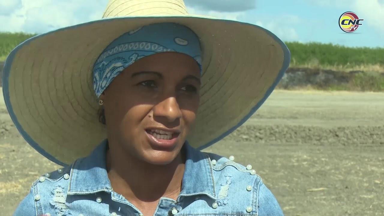 Adisleidis Fuentes, única mujer extensionista del cultivo de arroz en Granma