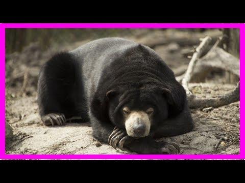 К чему снится медведь | TVRu