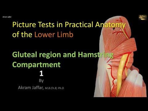 Test obrazkowy z anatomii kończyny dolnej - okolica pośladkowa i tylnej części uda 1
