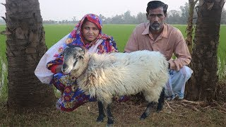 Full Sheep Recipe In Village Style Whole Lamb Cooking   TRADITIONAL SHEEP MEAT CURRY For Orphan Kids