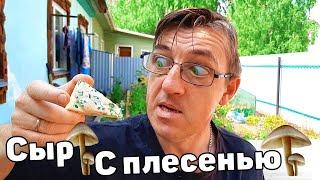 У Макса 1,51 тыс. подписчиков ПРОБУЕМ СЫР С ПЛЕСЕНЬЮ! Сыр с голубой плесенью «Джерси  Блю» Всегда хотел попробовать сыр с плесенью, вот и попробуем сегодня  сыр Джерси Блю. Сыр с плесенью. Но я бы сказал что плесень не  голубая, а