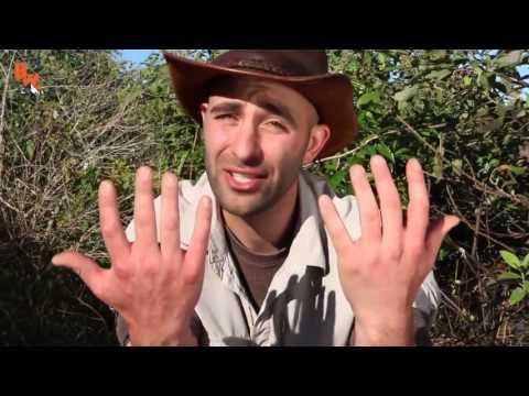Longuent de la dermatite variqueuse des pieds