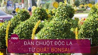 Ngắm đàn chuột độc lạ từ quất bonsai | VTC Now