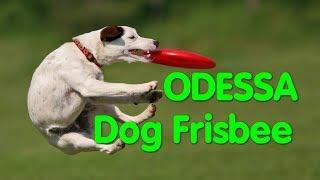 Dog Frisbee Odessa. Летающие собаки. Дог-Фрисби. Супер собака. Чемпионы. Спорт. Одесса. VLOG DOG.