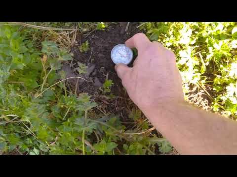, title : 'Very Cold Spring- Soil Temp Check. Can I plant tomatoes yet?