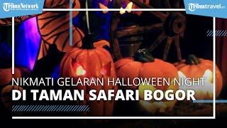 Gratis! Nikmati Gelaran Halloween Night di Taman Safari Bogor