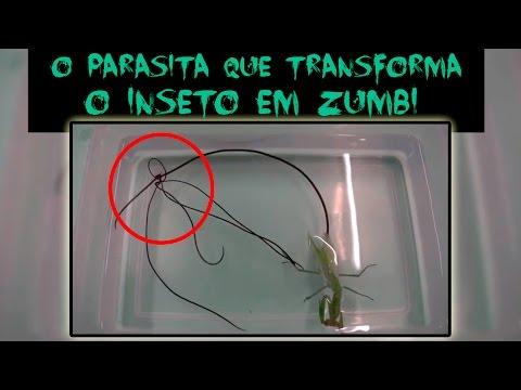 Descrizione di lyambliya di parassiti