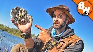 How to Track a Predator!