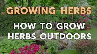 How to Grow Herbs Outdoors