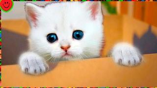МОЙ МАЛЕНЬКИЙ КОТЕНОК игровой мультик про котиков СИМУЛЯТОР КОШКИ видео для малышей Surprise BOX