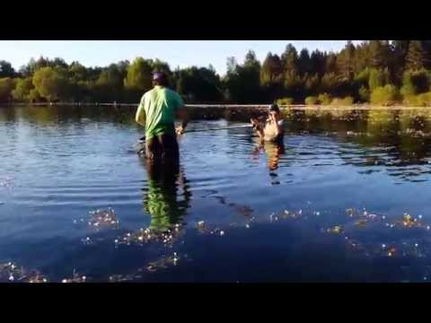 Voto per pesca