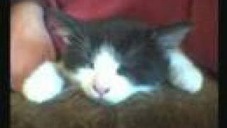 """Stephen Lynch """"Kitten"""" (the MCoV Version)"""