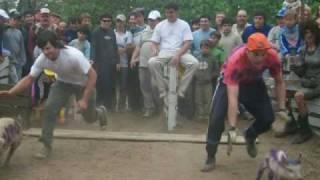 preview picture of video 'Carrera de Chanchos - Colonia Caroya'
