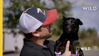 A Pawless Dog Gets New Prosthetics | Wizard of Paws