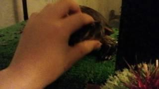 Прикол! Про черепаху