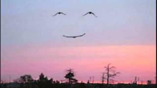 John Butler Trio - For You