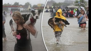 People Helps And Rescue Animals Lives 2017 -  Real Life Heroes - Ultimate Compilation