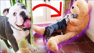Buying My Dog a Giant Dog Toy That Comes To Life * SO FUNNY *