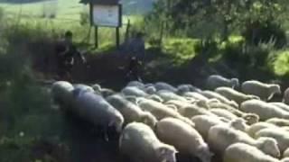 Agricoltura Nuova - Le Pecore