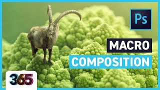 Macro Composition | Photoshop CC Tutorial #267/365