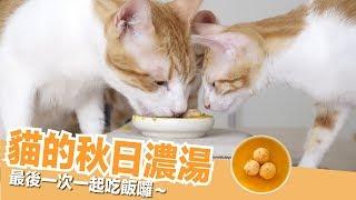 最後一次全貓福吃飯囉~大家都愛的秋日濃湯!【貓副食食譜】好味貓廚房EP117