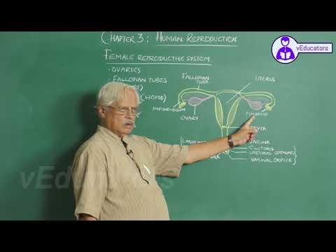 Dr T.A Balakrishna Adiga