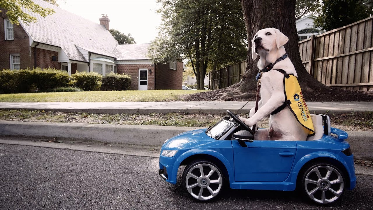 Has Your Car Gone to the Dogs?