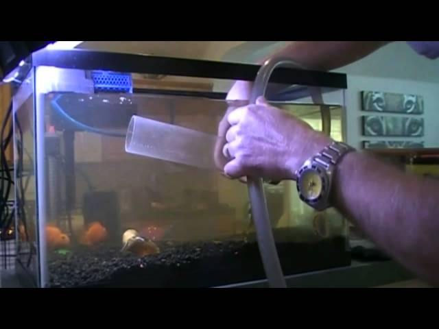 10 Gallon Aqarium Cleaning Tutorial (Episode 5)