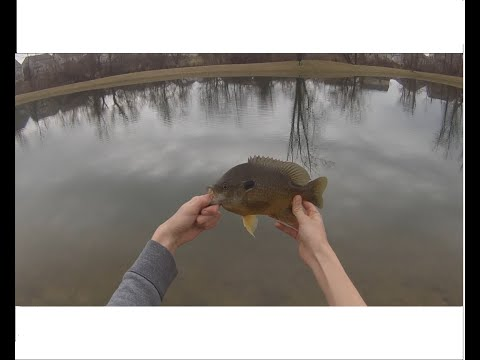 Bait Fishing Ponds for Bass and Bluegill in the Early Spring