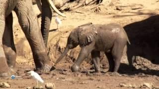 Диктант люди занимающиеся ловлей слонов