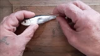 Как правильно насадить живца на щуку