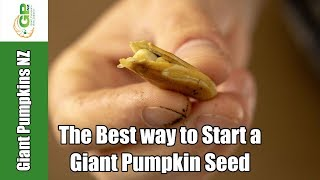 The Best Way to Start a Giant Pumpkin Seed