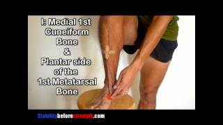 Tibialis Anterior Muscle Anatomy of the Lower Leg 1/12 Anterior Tibialis Muscle Anatomy