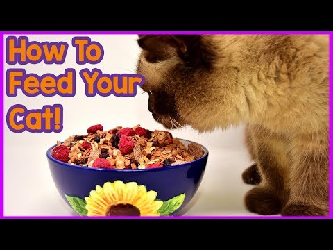 The ONLY Way to Feed Your Cat! How to Feed Your Cat Properly! What Should You Be Doing Differently?