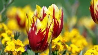 """Peaceful Relaxing music, Instrumental music """"Earth's Flowers"""" by Tim Janis"""