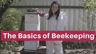 Beekeeping for beginners- The absolute basics