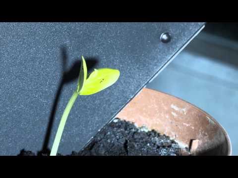 I rulli posteriori per crescere sottile