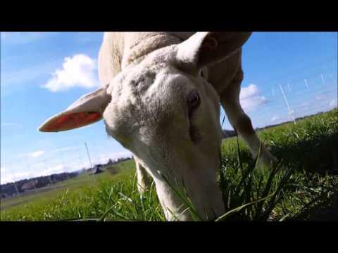Video die Prüfung auf der Würmer