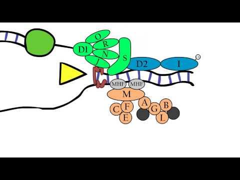 Traiter le papillomavirus chez lhomme
