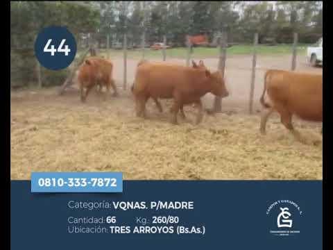 Lote Vq - Tres Arroyos
