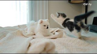 [vlog] #먼치킨 #새끼고양이 소설이 육묘일기 (6) - 날아라 소설이