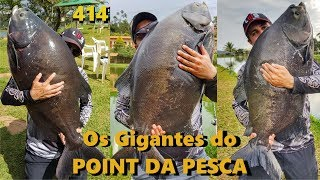Tambas Gigantes na Superfície no Point - Fishingtur na TV 414